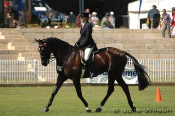 Janice Keelan rode Harmony Park Omen to third place in the Novice Hack over 16 hands.