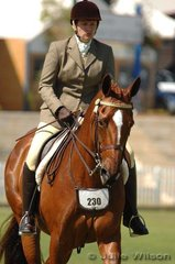 Wendy Sutton exhibited Miss Mowtown to fourth place in the Novice Hack over 16 hands.