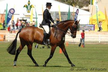 Champion Novice Hack, Bradman, owned and ridden by Georgina Oakland-Boyd.