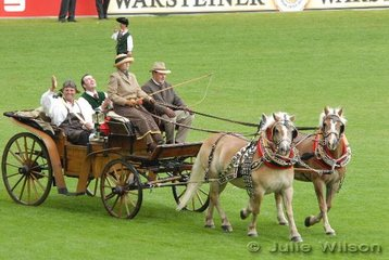 A delightful pair of Haflingers with a couple a very happy passengers.
