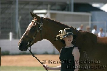 A quiet moment for Amanda Millar & 'Satine' in the Hack ring