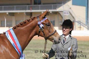 Reserve Led Stallion or Colt Of The Year went to Melissa Waller's colt 'HL Orion'