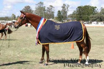Champion Led Stallion Of The Year was 'NB Welt's Flight' a warmblood owned by Nicole Williams