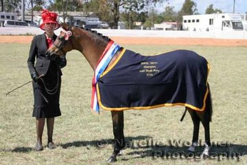 Champion Led Small Pony Of The Year 'Mondiso Park Just A Dream' was shown by Courtney Midson & owned by Brooke Langbecker