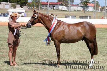 Reserve Champion Led Large Pony Of The Year 'Callista Jet Stream' owned by A.Mair & shown by Karen Morris