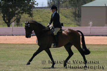 Working out after a break from the show circuit Fiona Williams riding 'Glencoe Milan' to win Champion Intermediate Large Hack Of The Year