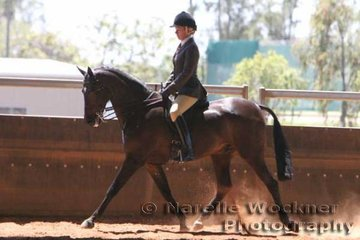 'Rathowen Timothy' ridden by Kim Durante & owned by Kayla Koorey took out the Champion Show Hunter Galloway Of The Year