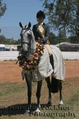 Champion Owner Rider Show Hunter Horse Of The Year 'Longreach Buddy' ridden by Skye Liikanen