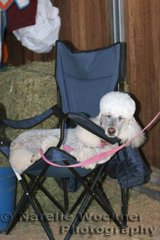 Peggy-Sue found a quiet place in the stables to have a well earned rest. It's a lot of hard work these horse shows!