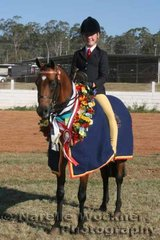 A successful win for Brooke Higgins & 'Kolbeach Classic' winning the Champion Owner Rider Large Pony Of The Year  & Champion Australian Saddle Pony Award