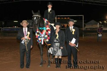 Final Champion for the evening was the Champion Large Hack Of The Year 'Royal Denial' ridden by Patricia Pilz with judges Darryl Hayes, Joanne Prestwidge & Peter Gardner