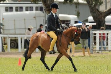 James Bell rode Kellie Withers', 'Rosedale Royal Chatter' to win the Novice and Open 12-12.2hh Pony classes, claim the Best Novice Small Pony award and the Open Small Pony Reserve Championship.