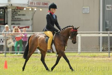 Courtney Bird is pictured riding Lisa Bird's, 'Myscal Memories' in the class for Novice Pony 12-12.2hh.
