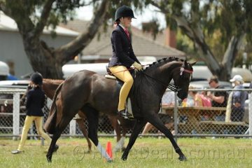 Tahlia Bird rode Lisa Bird's, 'Tungarra Siletto' to third place in the class for Open Pony 12-12.2hh.
