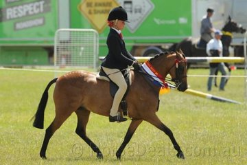 Tori Fair rode Danyel and Nicole Riemer's very well performed,'Radford Lodge Candy Cane' to win the class for Open Pony 11.2-12hh and go on to take out the Small Pony Championship.