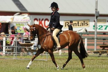 Renae Cooke rode her good moving, 'Sheldene Shenelle' to third place in the class for Novice Pony 12-13hh.