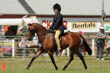 Stephanie Day rode her good working, 'Harrington Park Catch Phrase' to win the class for Novice Pony 13-13.2hh.