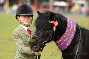 A very capable, Taylah Pegler from Ballarat did the honours with Debbie Ross', 'Fernden Park Monty' to claim the Reserve Champion Led Shetland Gelding award.