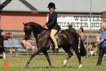 Lynda Hayes is pictured aboard the super pony, 'Kolbeach Promise' that won the class for Open Pony 13-13.2hh.