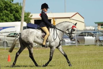 Ava Halloran had the most sensational day riding the Halloran and Ginn nomination, 'Karlana Opening Night'. The Raymond Butler bred pony was declared Champion Child's Pony won the Open 13.2-14hh,was declared Champion Large Pony and Grand Champion Pony Hack.