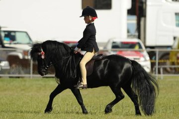 Stella Horspole rode Carolyn Bellman's super, 'Thorpeville Trendy' to win the class for Child's Pony 10.2hh and Under.