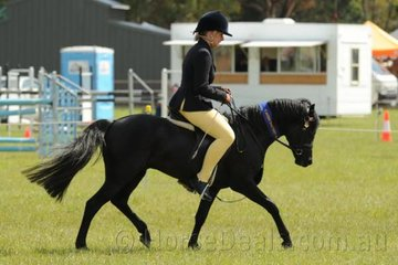 Jess Hill rode Lisa Bailey's,'Naruni Park Class' to win the Ridden Pony Stallion/Colt class.