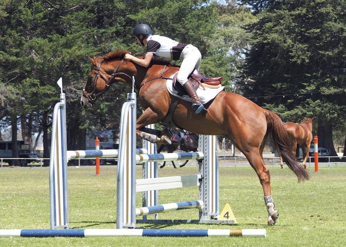 Kane (14yo) riding Gilly, a 16hh, 10yo, TB gelding. Kane has had Gilly for 2½ years.