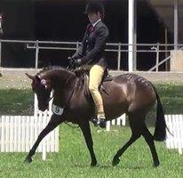 Glen Monarch Amelia RR Pony