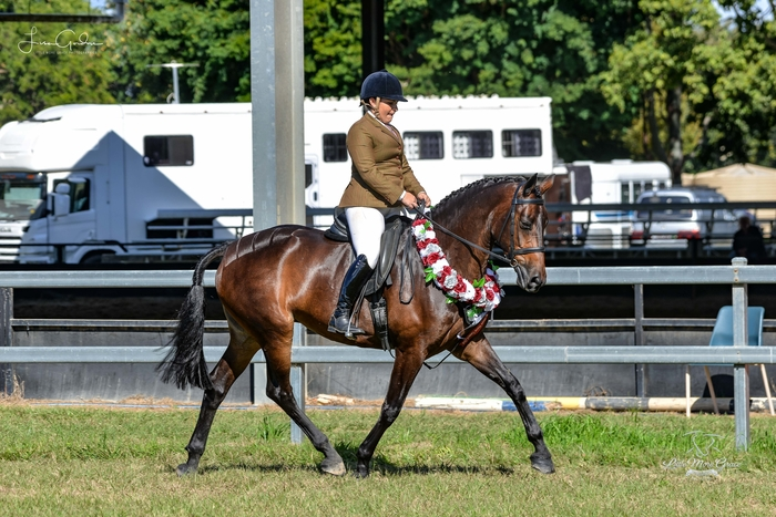 Rising Star Show Hunter Horse of the Year, Lisa Gordon