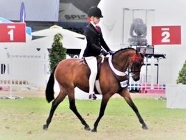 Top Quality Show Pony