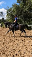 Hanoverian GP Dressage Gelding
