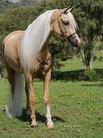 Beautiful Arabian