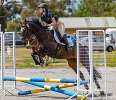 Great Allrounder Mare