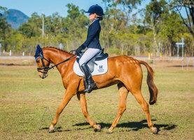 Stunning Dressage/ Show Pony