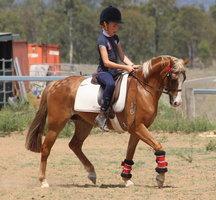 Exquisite Pony