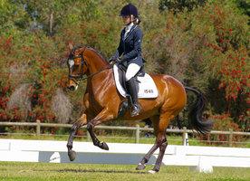 Advanced Dressage Pony