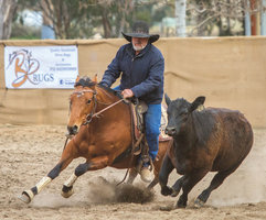 Competitive Campdraft Mare