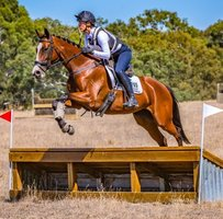 Beautiful Eventing Mare