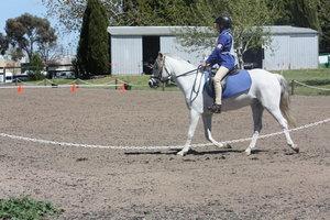Superb All round Pony