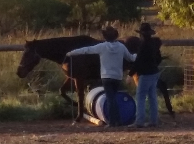 Natural Horsemanship Training