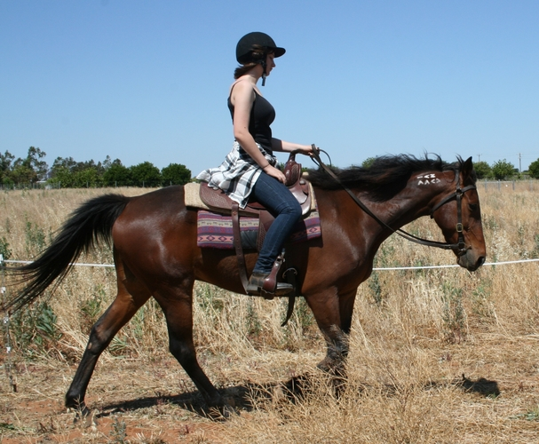 Early days riding pre Natural Horsemanship Training