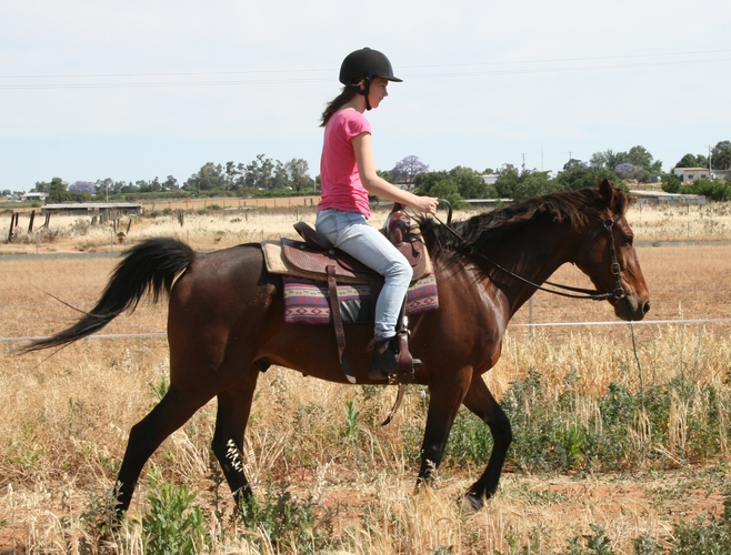 Getting to know you....pre Natural Horsemanship Training