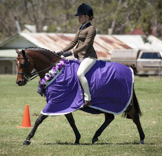 Some results include- -Champion Large Hunter Pony NSW Hack Championships -Champion Large Hunter Pony Toowoomba Royal -Runner Up Child's Large Show Hunter Pony QLD Country Hack Championships  - Champion Child's Large Hunter Pony SHCQ HOTY - Runner Up Open Large Hunter Pony  SHCQ HOTY