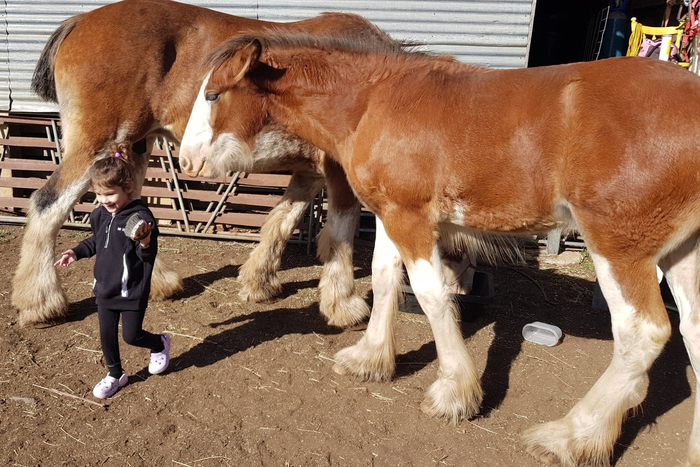 Progeny pictured at 5 months old,
