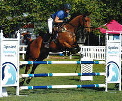 Showjumper/Eventer