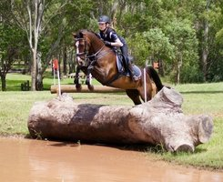 Great Jumping Pony for Sale