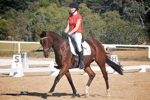 Dressage, Jump or Event, WB