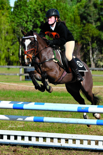 Julie Wilson Equestrian Photography