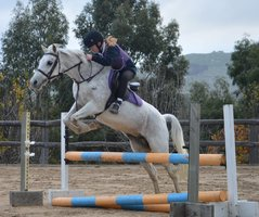 Fantastic Second Pony