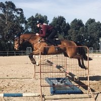 Quality Eventing Mare